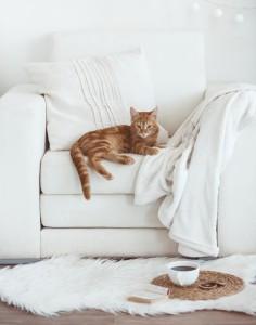 Katze (2)